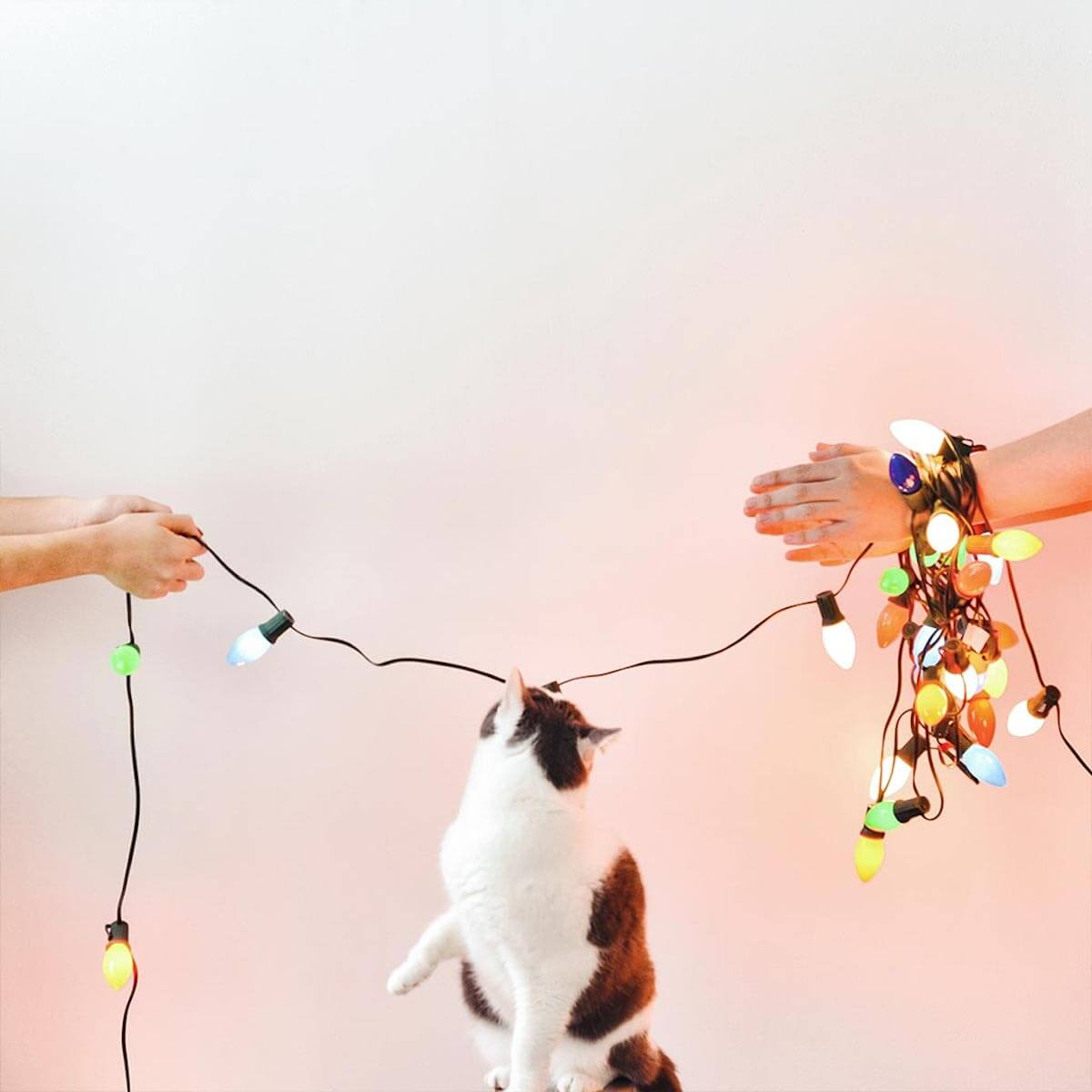 Cat playing with bulb lights overhead