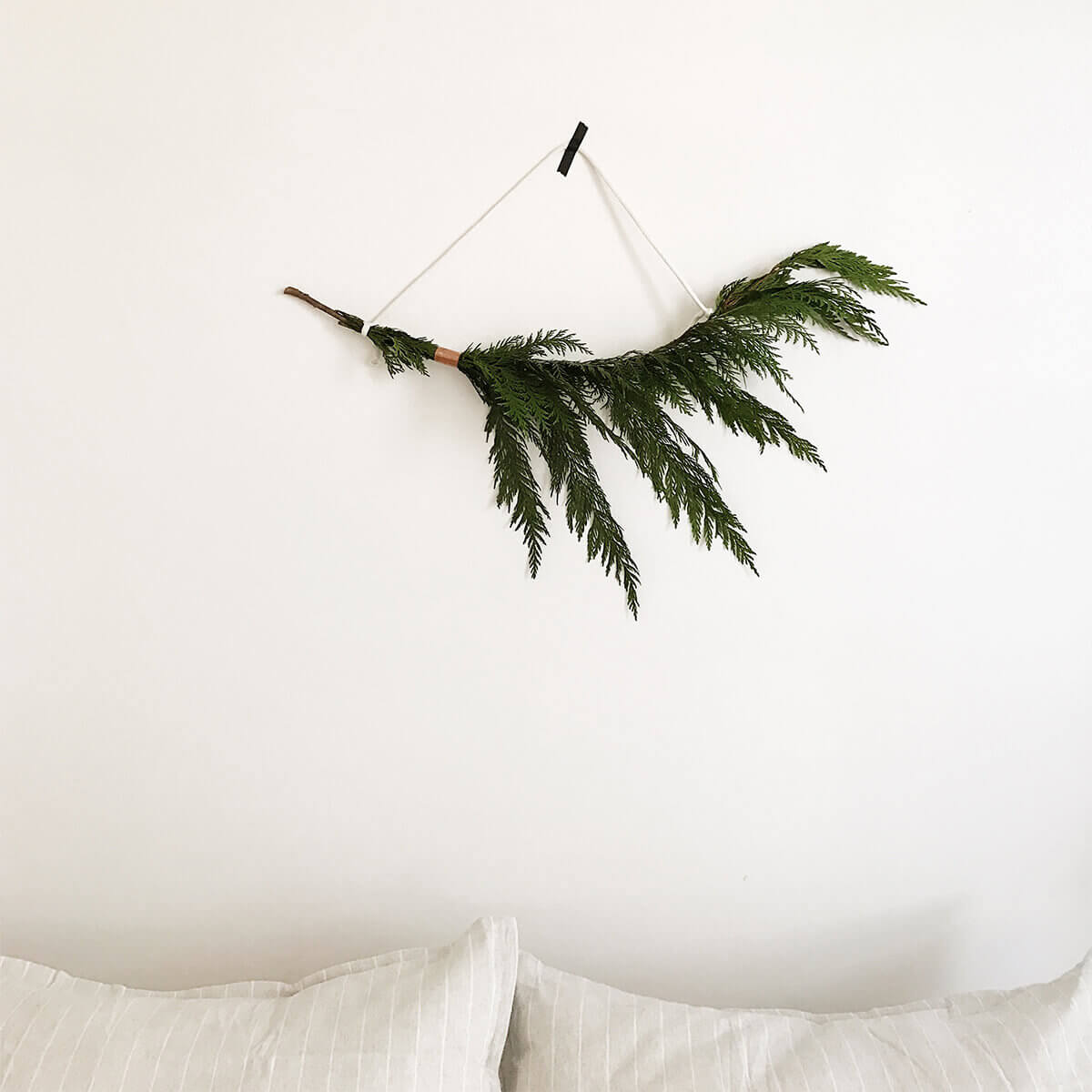 Branch of pine hanging above bed