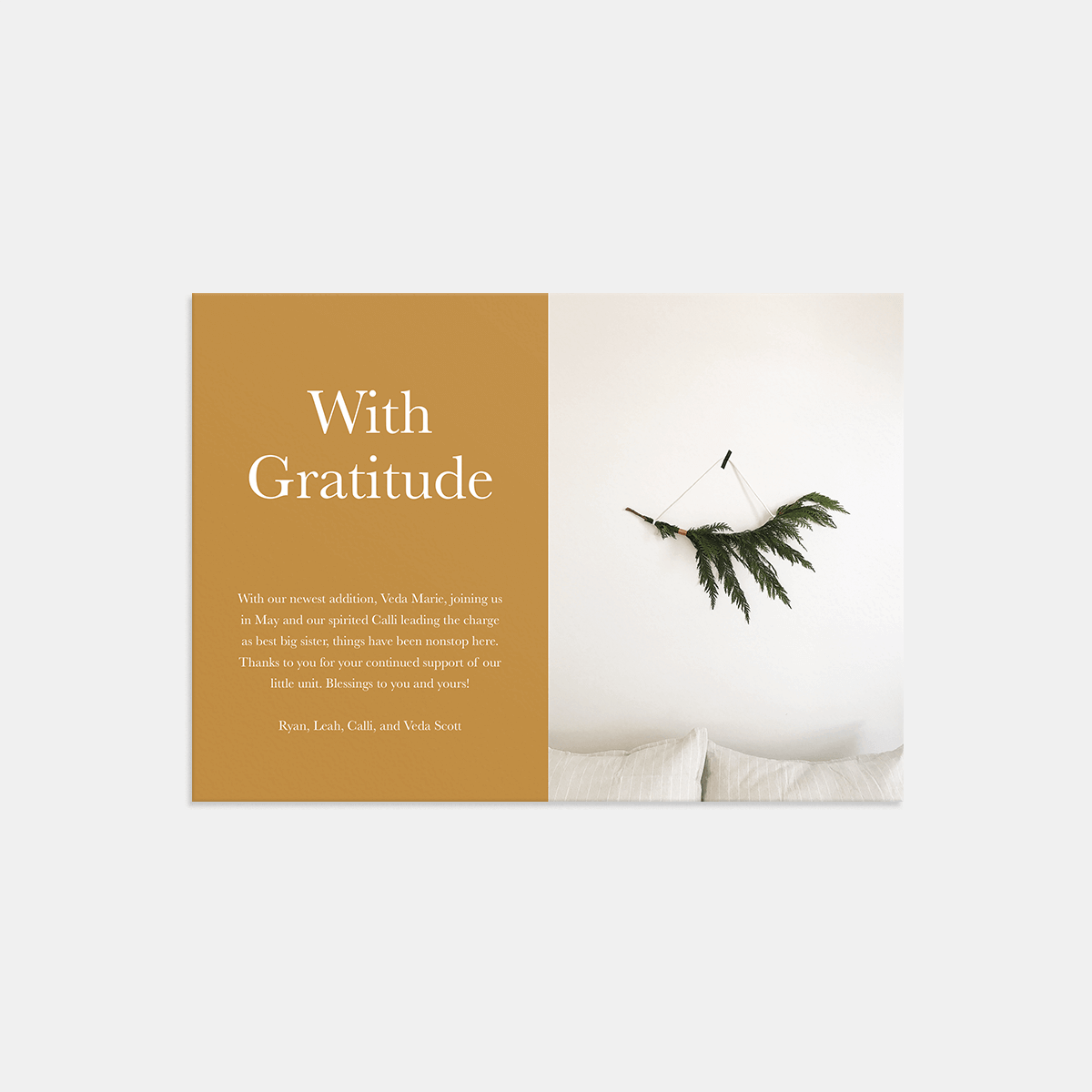Same photo of pine branch on wall on holiday gratitude card
